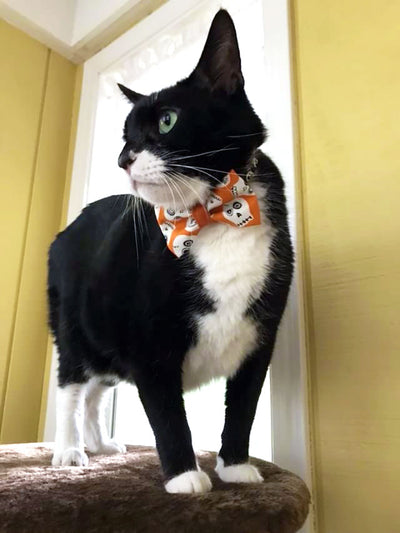 "Halloween Bow Tie Cat Collar Set - ""Ghost Town"" - Glow in the Dark Skulls/Cat Collar with Bow Tie (Removable)"