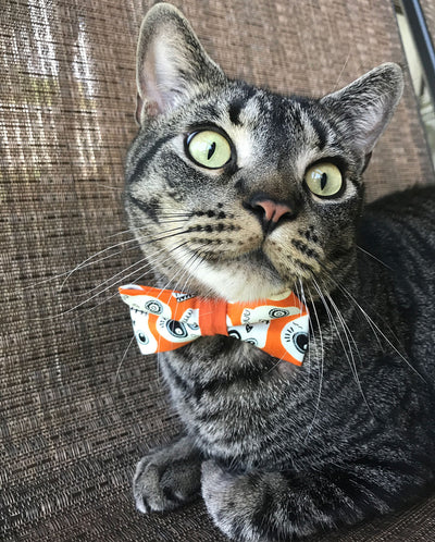 "Halloween Cat Bow Tie - ""Ghost Town"" - Glow in the Dark Skulls - Orange Cat Bowtie/Kitten Bow/Small Dog Bow Tie - Removable (One Size)"