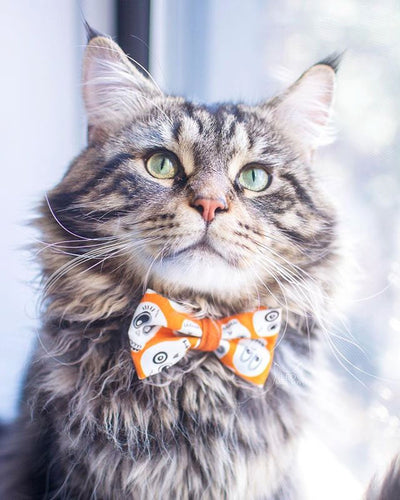 "Halloween Cat Bow Tie - ""Ghost Town"" - Glow in the Dark Skulls - Orange Cat Bowtie / Kitten Bow / Small Dog Bow Tie - Removable (One Size)"