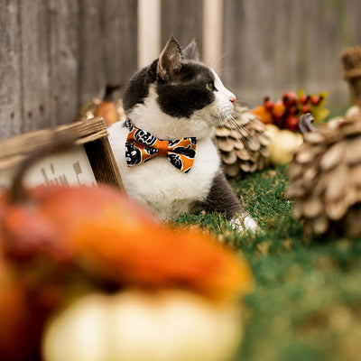 "Halloween Cat Collar - ""Sleepy Hollow"" - Glow in the Dark Pumpkins - Breakaway Buckle or Non-Breakaway - Cat, Kitten & Small Dog Sizes"