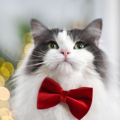 "Pet Bow Tie - ""Red Velvet"" - Rich Lustrous Red Soft Velvet - Christmas / Holiday - Detachable Bowtie for Cats + Dogs"