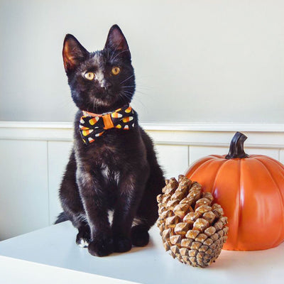 "Halloween Cat Collar - ""Trick or Treat"" - Candy Corn on Black & Orange"