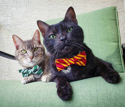 "Bow Tie Cat Collar Set - ""Wizarding School / Green"" - Harry Potter-Inspired Cat Collar w/ Matching Bow Tie (Removable)"