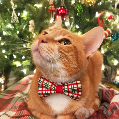 "Christmas Pet Bow Tie - ""Holiday Road"" - Red & Green Plaid Bowtie for Pet Collar / For Cats + Small Dogs / Removable (One Size)"