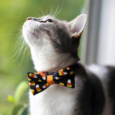 "Halloween Cat Bow Tie - ""Trick or Treat"" - Candy Corn - Cat Bowtie/Kitten Bow Tie/Small Dog Bow Tie - Removable (One Size)"