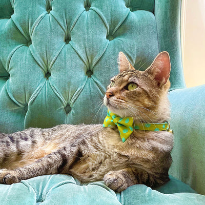 "Pet Bow Tie - ""Pop Rocks - Chartreuse"" - Green & Aqua Polka Dot Bow Tie for Cat / Birthday / For Cats + Small Dogs (One Size)"