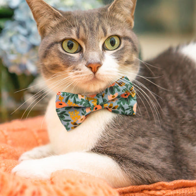 "Rifle Paper Co® Pet Bow Tie - ""Ambrose"" - Periwinkle Floral Bow Tie for Cat / Spring + Summer / For Cats + Small Dogs (One Size)"