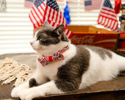 "Cat Collar - ""Old Glory"" - American Flag Pet Collar / 4th of July - Breakaway Buckle or Non-Breakaway / Cat, Kitten + Small Dog Sizes"