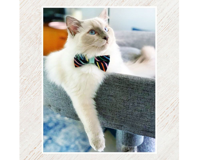 "Rifle Paper® Cat Bow Tie - ""Cape Cod"" - Navy Rainbow Stripe Cat Collar Bow Tie / Kitten Bow Tie / Small Dog Bowtie / Removable (One Size)"