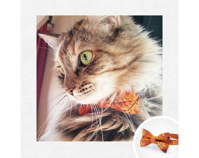 "Bow Tie Cat Collar Set - ""Fall-ing For You"" - Fall Leaves & Acorns on Burnt Orange Cat Collar w/ Matching Bow Tie (Removable)"