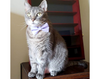"Bow Tie Cat Collar Set - ""Color Collection - Lavender"" - Purple Cat Collar + Matching Bow Tie (Removable)"