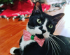 "Pet Bow Tie - ""Candy Cane"" - Red & White Stripes w/ Green Tie - Christmas / Holiday - Detachable Bowtie for Cats + Dogs"