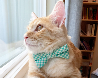 "Cat Bow Tie - ""Mint Julep"" - Seafoam Green Gingham Plaid Bowtie / For Cats + Small Dogs / Removable (One Size)"