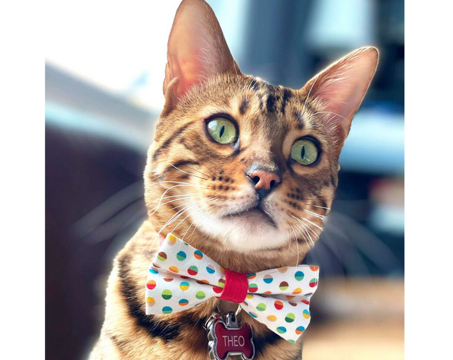 "Cat Bow Tie - ""Rainbow Dots"" - Multicolor Polka Dot Party Bowtie / For Cats + Small Dogs / Removable (One Size)"