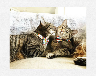 "Pet Bow Tie - ""Rainbow Magic"" - Rainbow Cat Collar Bow Tie / LGBTQ Pride / Cat, Kitten, Small Dog Bowtie / Removable (One Size)"