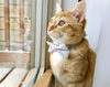"Valentine's Day Cat Bow Tie - ""Devotion - Gray"" - Gold Hearts on Light Gray Bowtie / For Cats + Small Dogs / Removable (One Size)"