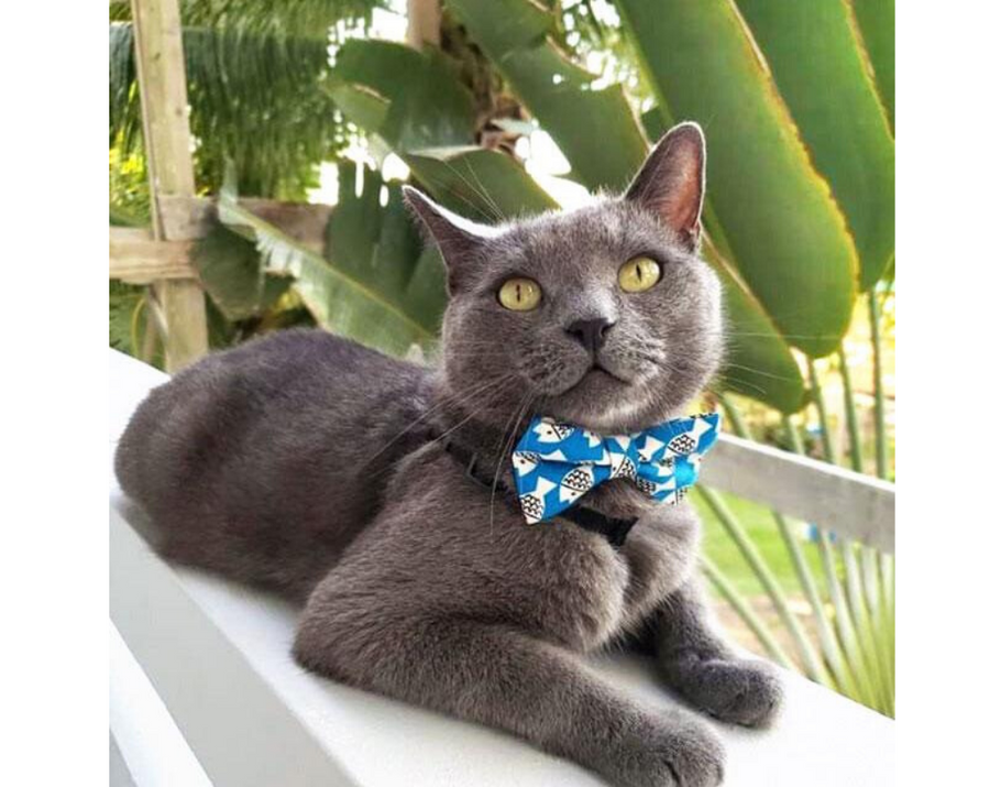 "Cat Bow Tie - ""Under the Sea"" - Ocean Blue Fish Bowtie / For Cats + Small Dogs / Removable (One Size)"