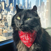 "Western Cat Bandana - ""Lone Ranger Red"" - Red Handkerchief Bandana for Cat + Small Dog / Texas / Cowboy / Slide-on Bandana / Over-the-Collar (One Size)"