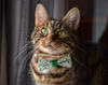 "St. Patrick's Day Pet Bow Tie - ""Shamrock Shore "" - Mini Shamrocks on White w/ Green Center Tie - Detachable Bowtie for Cats + Dogs"