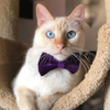 "Velvet Pet Bow Tie - ""Amethyst"" - Purple Velvet Bowtie / Wedding / For Cats + Small Dogs / Removable (One Size)"