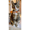 "Bow Tie Cat Collar Set - ""Autumn Leaves"" - Fall Cat Collar w/ Matching Bowtie (Removable)"