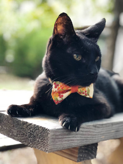"Fall Cat Bow Tie - ""Autumn Harvest"" - Pumpkin Cat Collar Bow Tie/Kitten Bow Tie/Small Dog Bow Tie - Removable (One Size)"