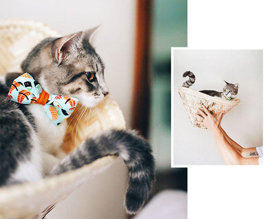 "Sushi Cat Collar with Flower Set - ""Sushi Date"" - Cat Collar with Mint Flower - Breakaway/Non-Breakaway/Cat, Kitten & Small Dog Sizes"