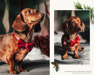 "Cat Collar - ""Holly Jolly Red"" - Christmas Holly on Red - Breakaway Buckle or Non-Breakaway / Cat, Kitten + Small Dog Sizes"