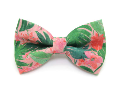 "Bow Tie Cat Collar Set - ""Tropic Paradise"" - Palm Leaf Cat Collar w/ Matching Bow Tie (Removable)"
