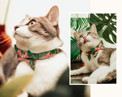 "Summer Cat Collar - ""Tropic Paradise"" - Palm Leaf Green Cat Collar - Breakaway Buckle or Non-Breakaway / Cat, Kitten + Small Dog Sizes"