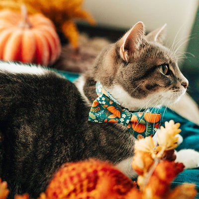 "Bow Tie Cat Collar Set - ""Pumpkin Patch"" - Harvest Teal Cat Collar w/ Matching Bowtie (Removable) / Fall + Thanksgiving"