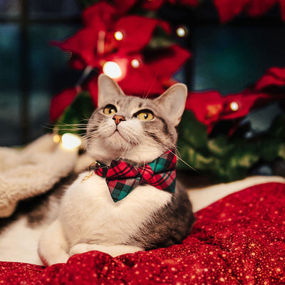 "Bow Tie Cat Collar Set - ""Fireside"" - Red & Green Holiday Plaid Cat Collar w/ Matching Bowtie (Removable)"