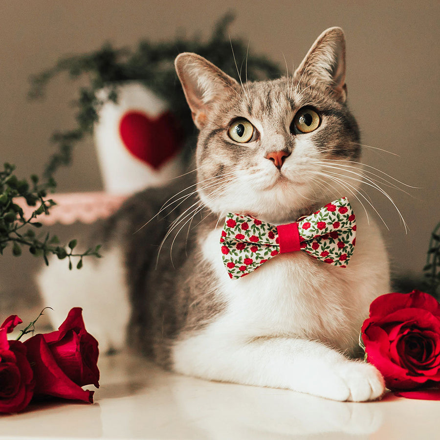 "Pet Bow Tie - ""Antique Rose"" - Red Mini Roses Bowtie for Cats + Small Dogs / Valentine's Day / One Size"