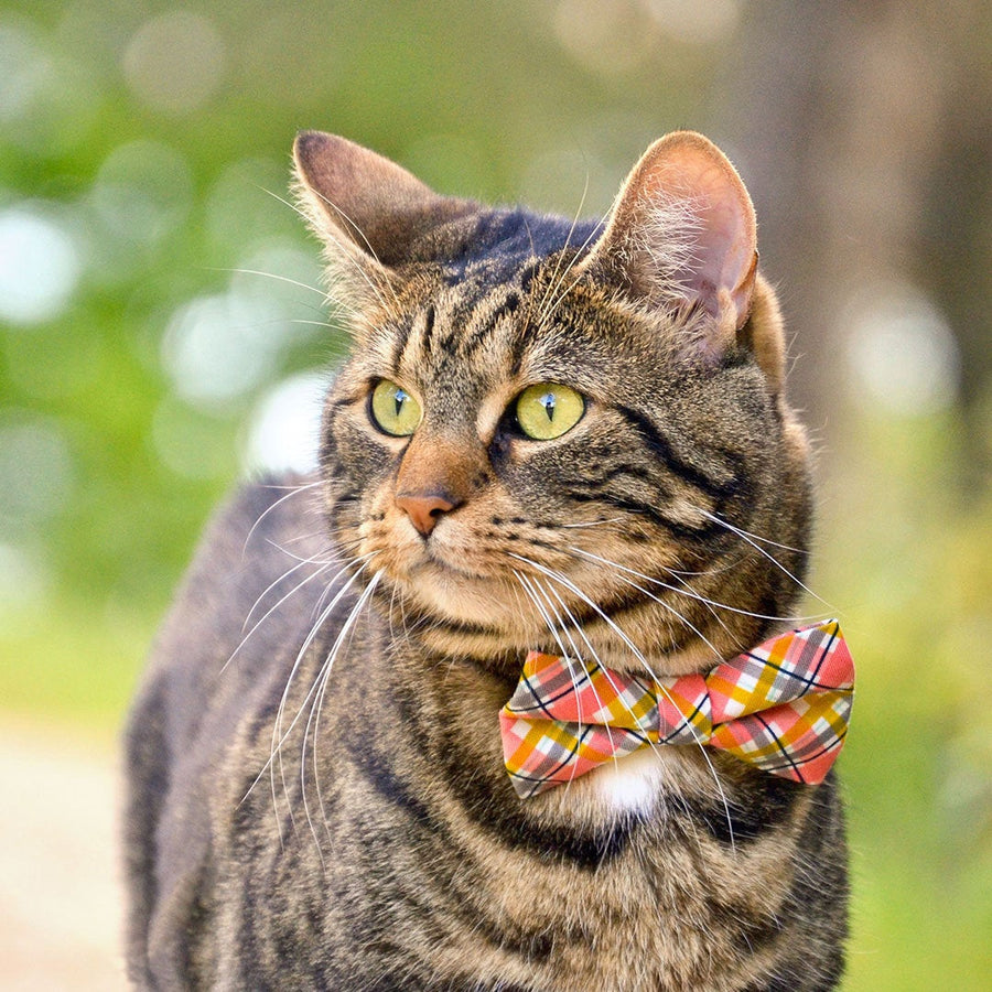 "Pet Bow Tie - ""Daydreamer"" - Coral & Mustard Yellow Plaid Bow Tie for Cat / Spring, Summer / For Cats + Small Dogs (One Size)"
