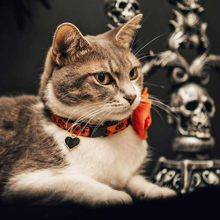 "Halloween Cat Collar + Flower Set - ""Gothic Halloween"" - Black & Orange Floral Cat Collar w/ Orange Felt Flower (Detachable)"
