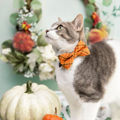 "Cat Collar + Flower Set - ""Persimmon Plaid"" - Fall Plaid Cat Collar w/ Plum Felt Flower (Detachable)"