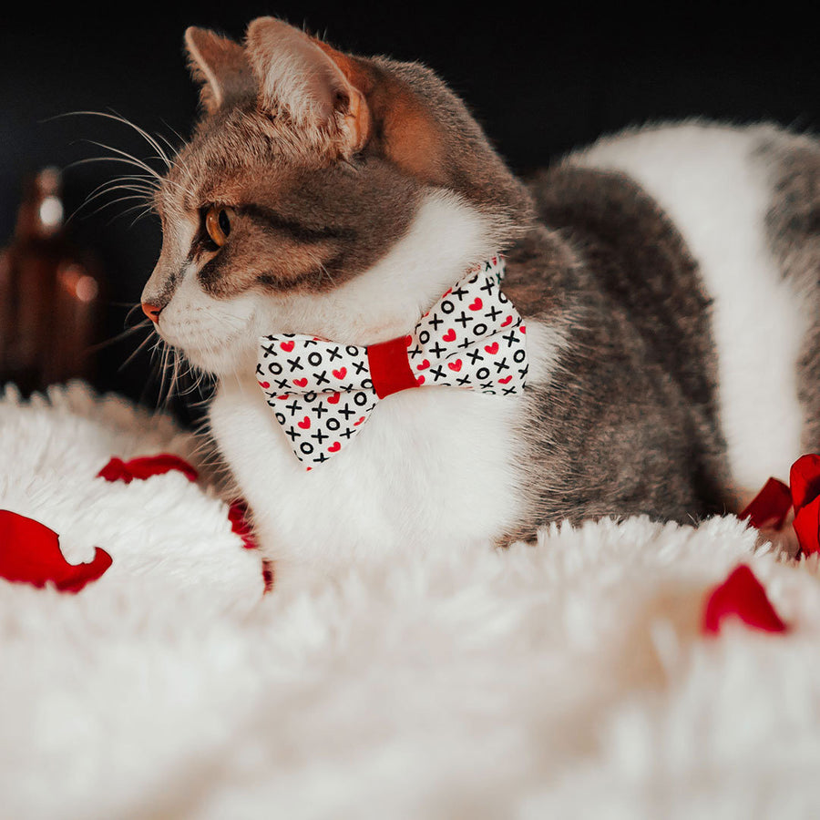 "Pet Bow Tie - ""XOXO Hearts"" - Hugs & Kisses Heart Bow Tie for Cats + Small Dogs (One Size) / Cat Bow Tie / Valentine's Day"