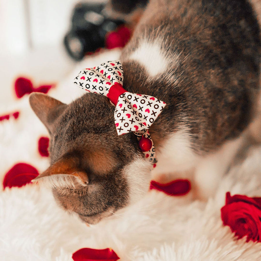 "Bow Tie Cat Collar Set - ""XOXO Hearts"" - Hugs & Kisses Heart Cat Collar w/ Matching Bowtie / Valentine's Day / Cat, Kitten, Small Dog Sizes"