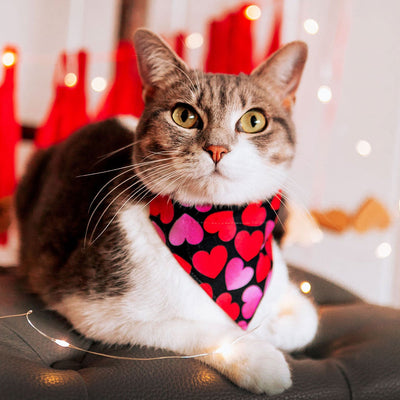 "Cat Collar - ""Ombre Hearts"" - Red & Pink Heart Cat Collar / Valentine's Day / Breakaway Buckle or Non-Breakaway / Cat, Kitten + Small Dog Sizes"