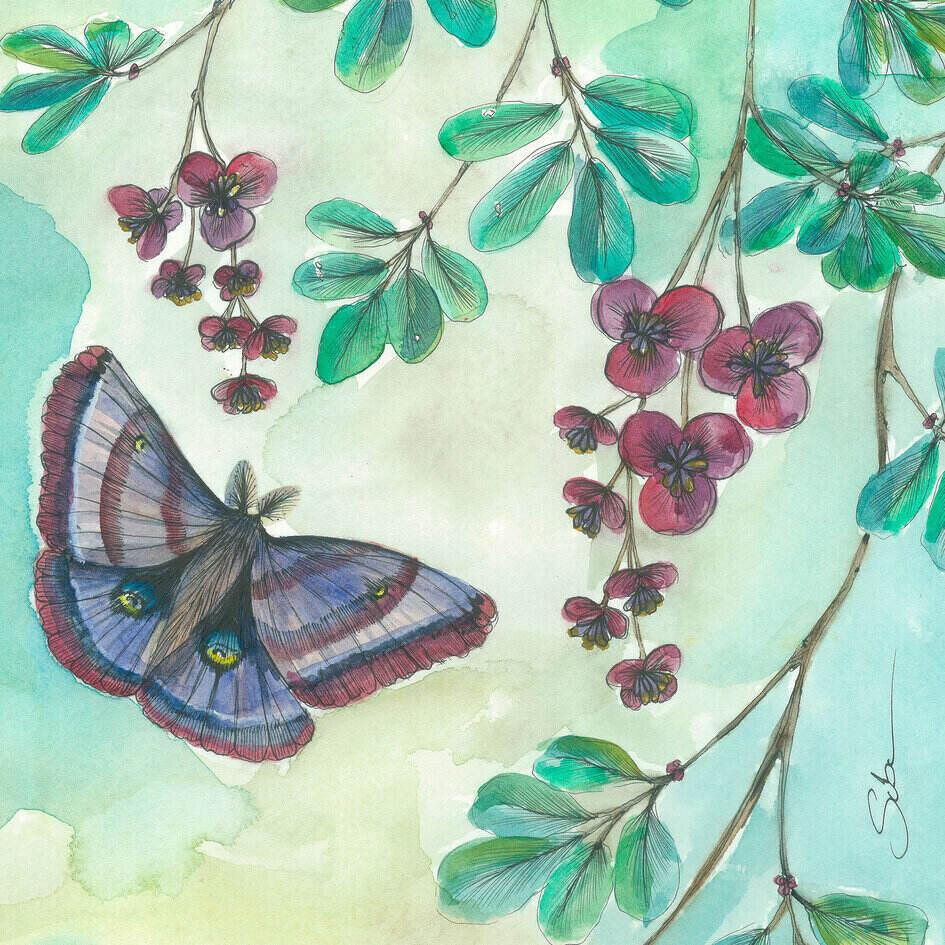 Butterfly and Chocolate Vine Original Suba