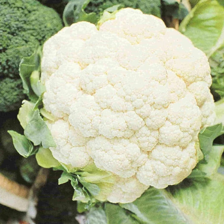 Early Snowball Cauliflower