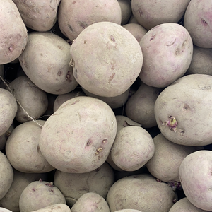 Chieftain Seed Potatoes