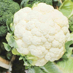 Early Snowball Cauliflower (Organic)