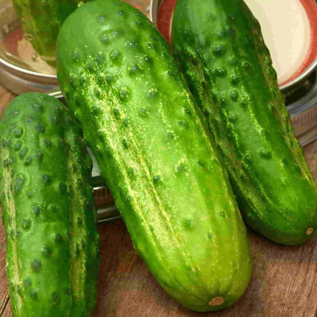Sow Easy Boston Pickling Cucumber