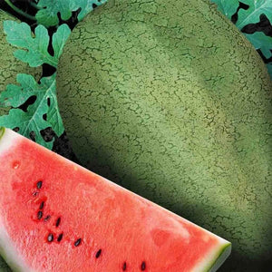 Watermelon Early Canada Improved