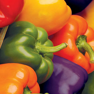 Sow Easy Bell Pepper Colour Mix
