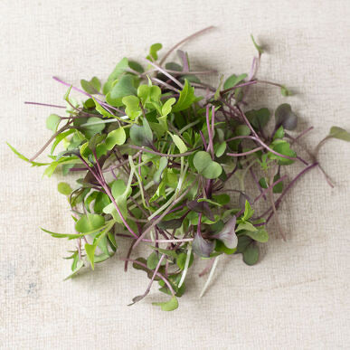 Sow Easy Hot Mix Micro Greens