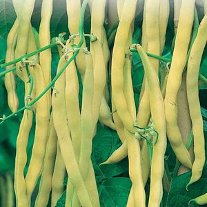Neckargold Wax Bean (Pole)