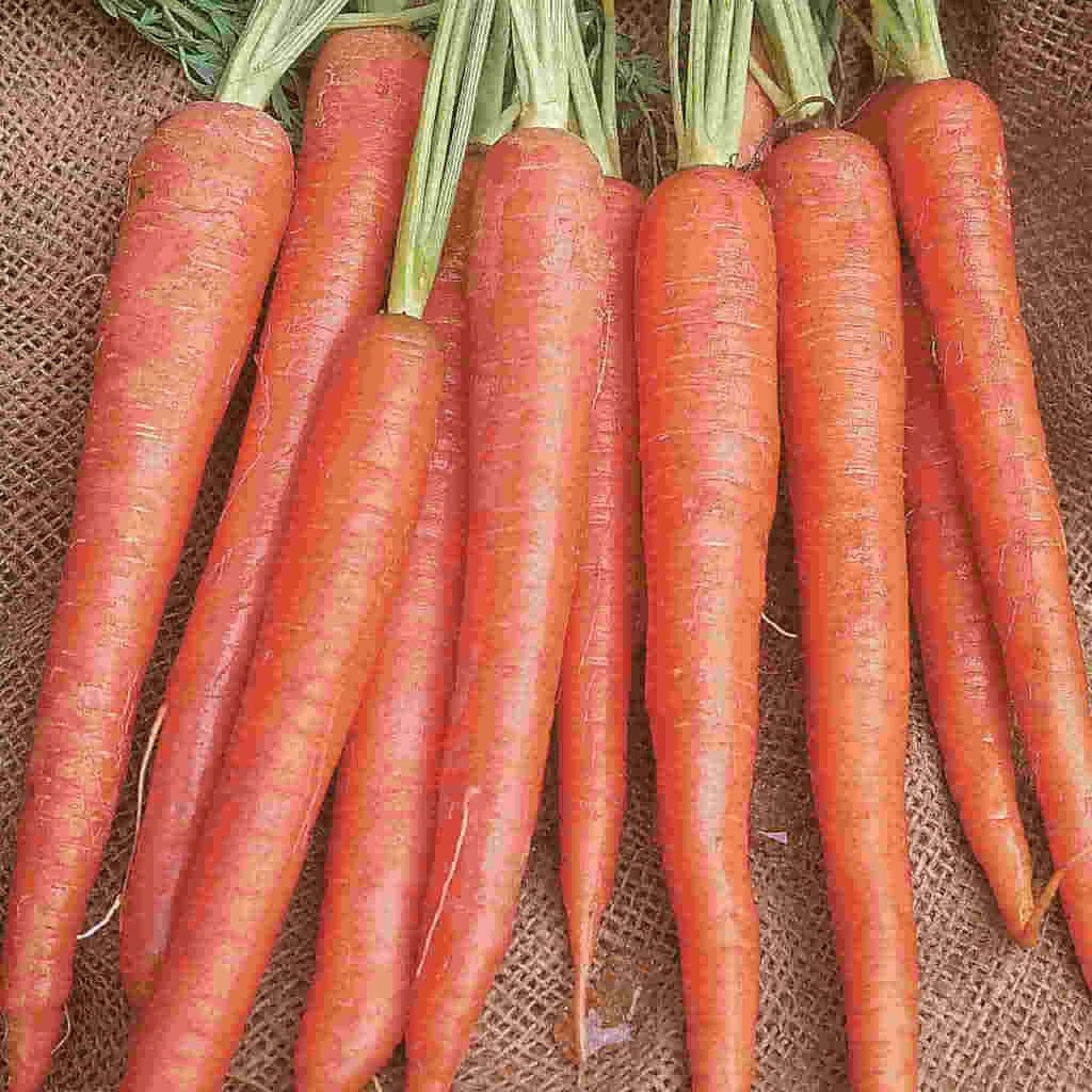 Sow Easy Long Imperator Carrot