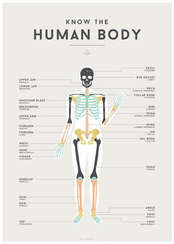 Human Body Chart by Squared Charts